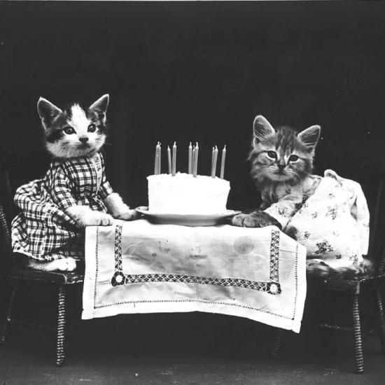 Adorable Vintage Cats Performing Human Tasks