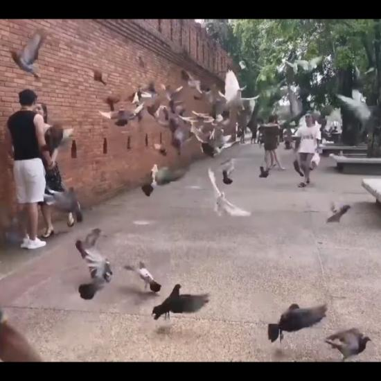 """Professional """"Pigeon Spookers"""" Scare Pigeons for the Perfect Tourist Photos"""