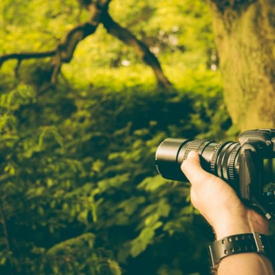 Top Beginner Cameras for 2019