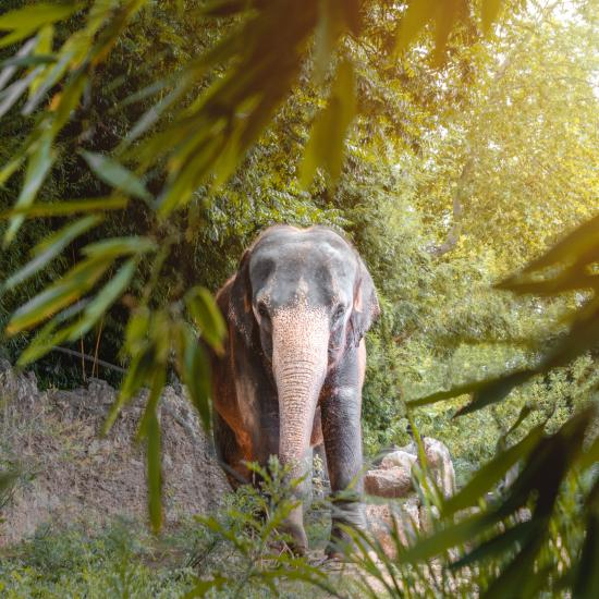 Photographer Trampled to Death by Angry Elephant on Safari