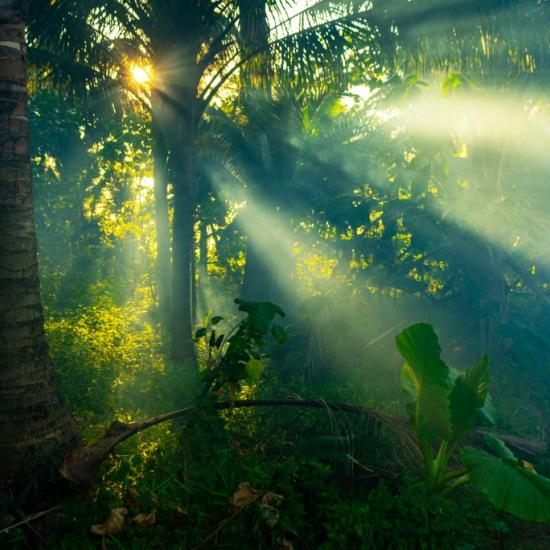 Jungle Photography Tips