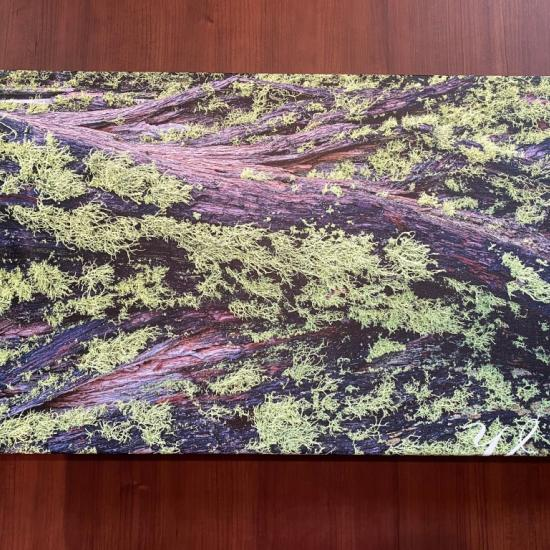 CanvasWorld Canvas Print Review