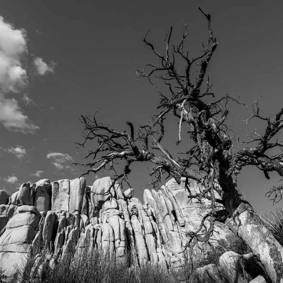 Photography Trek and Adventures: Joshua Tree