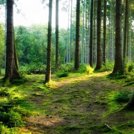 How to Crop Landscape Photos
