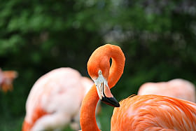 Digital Photography—Learn How to Shoot Animals at the Zoo