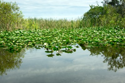 Miami Travel Photography: The Everglades Forever!