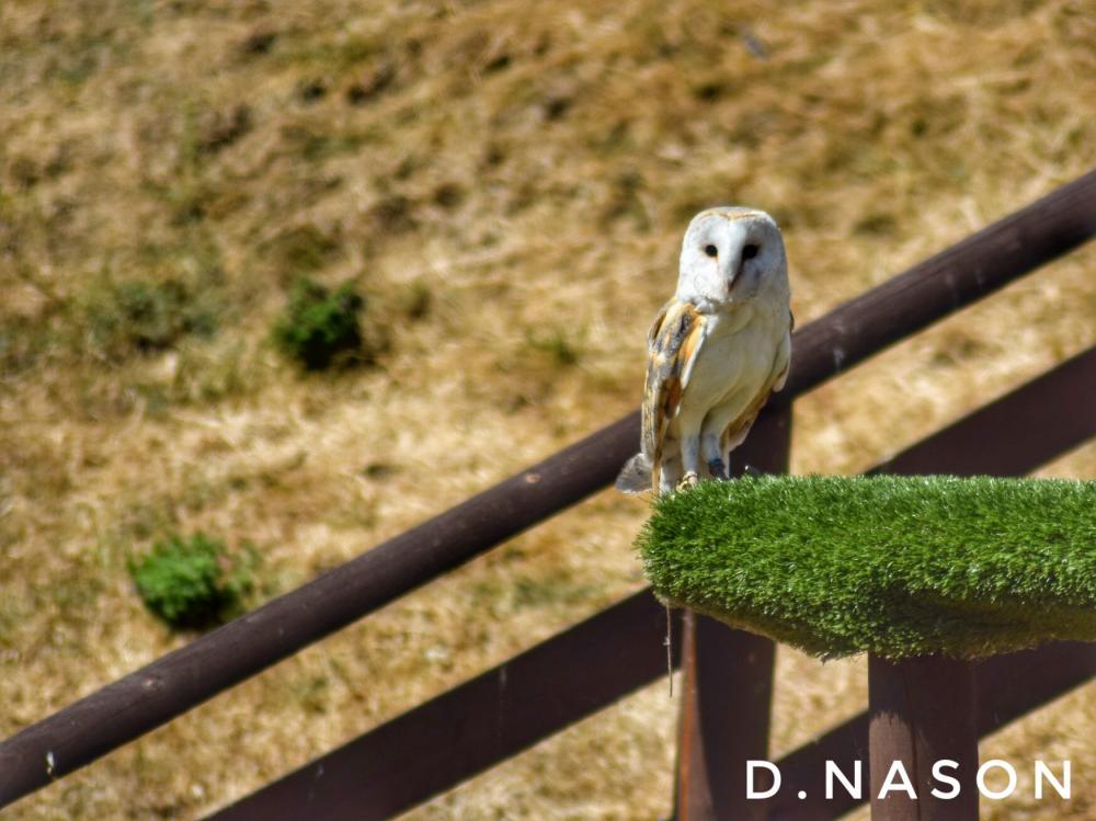D.Nason