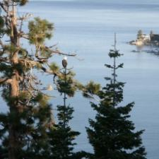 Lake Tahoe Wildlife  !