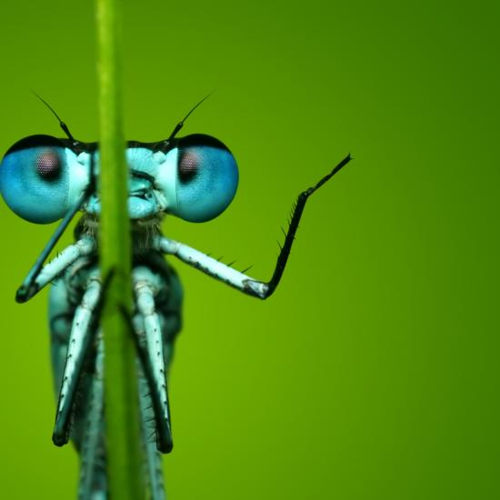 11 Macro Photos That are Out of This World!