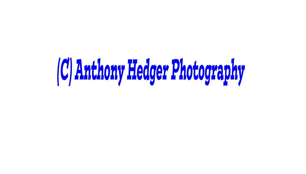 Anthony Hedger