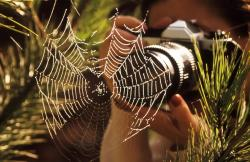 Top 3 Lenses for Photographers Who Love Macro