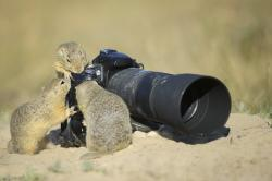 These 6 Spectacular Wildlife Photos all Have Something Special